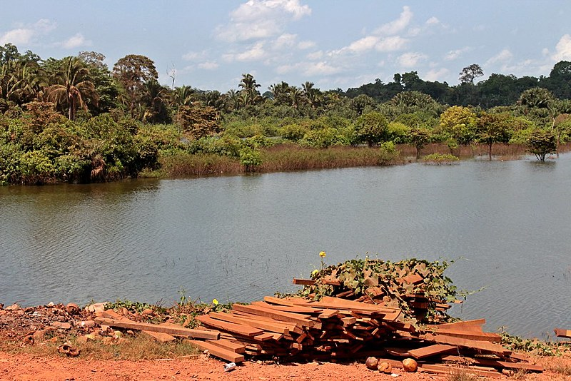 Espécies nativas à margem do rio Pucuruí evidenciam a contribuição dos Parakanã para a proteção da Amazônia
