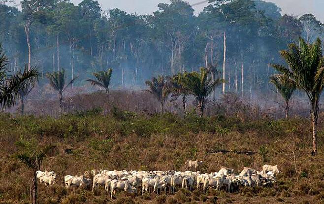 Desmatamento e queimadas abrem espaço para o agronegócio na Amazônia