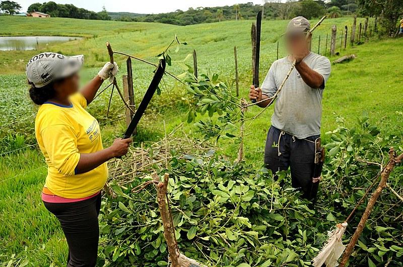 Erva-mate é um dos setores com maior incidência de trabalho análogo à escravidão no Sul do país
