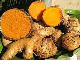 Açafrão-da-terra, conhecido também como cúrcuma tem o formato semelhante ao gengibre se difere pela cor
