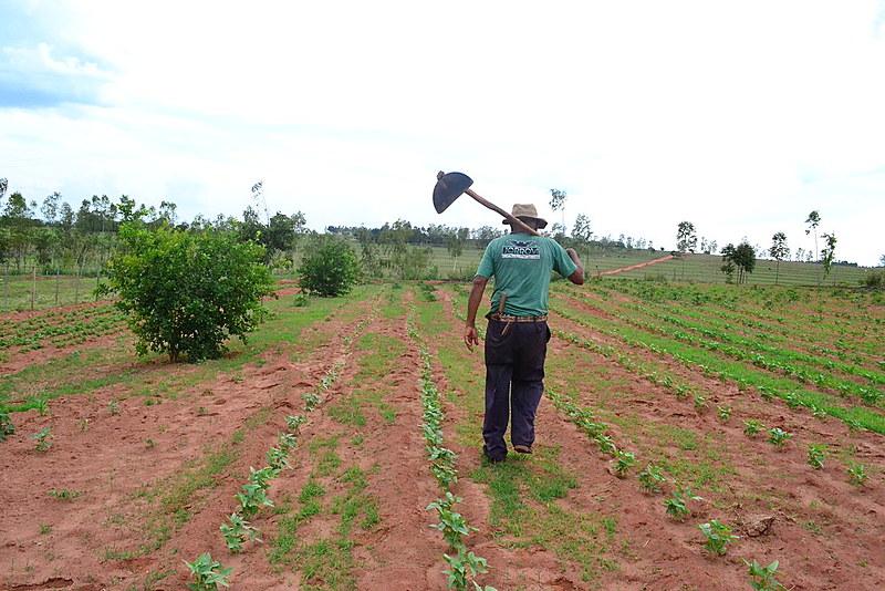Em Mirante do Paranapanema, somente 20 famílias, de dois assentamentos, conseguiram se manter como beneficiários fornecedores do programa