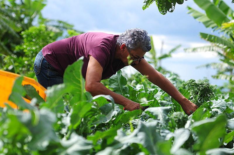 Na imagem, agricultora do Programa de Aquisição da Produção da Agricultura no Distrito Federal