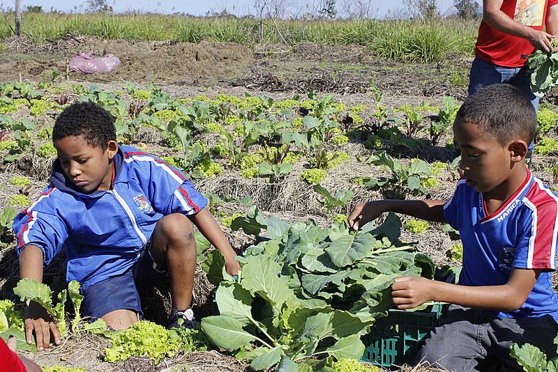 Estudantes da rede pública participam da primeira colheita da Unidade Agroecológica de Maricá