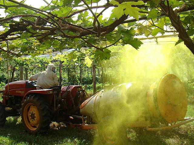 Multinacionais agroquímicas controlam cerca de 68% de todo o fornecimento comercial de sementes
