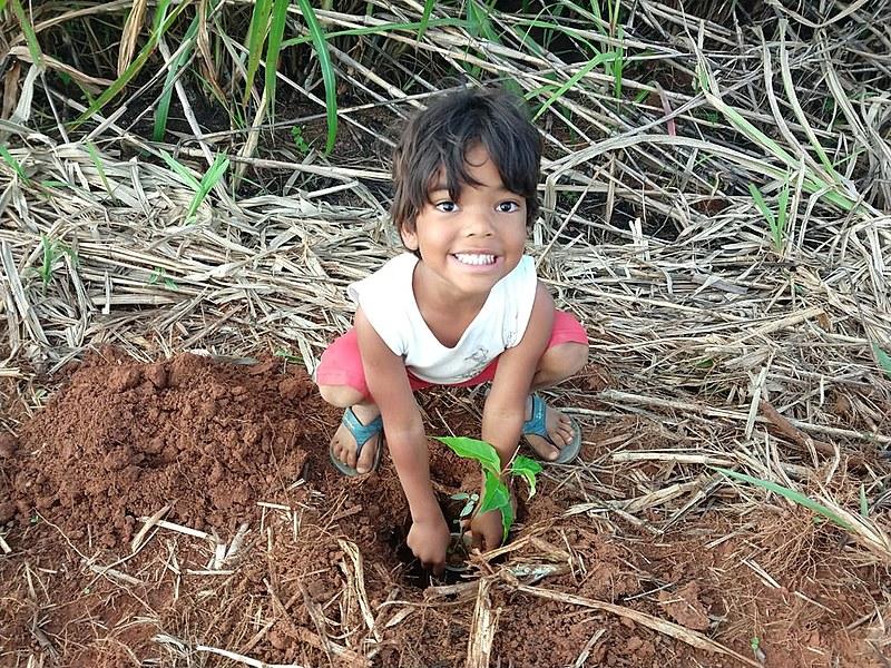 Plano nacional de reflorestamento do MST foi lançado no DF no sábado (14), com plantio de mudas e comemoração