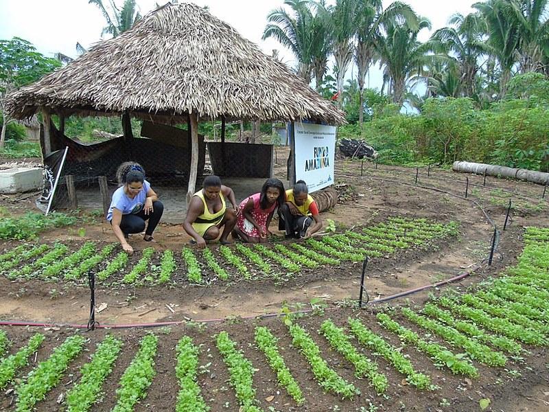 Onze famílias do acampamento foram beneficiadas pelo Fundo Amazônia para construção de hortas e recebimento de placas de energia solar