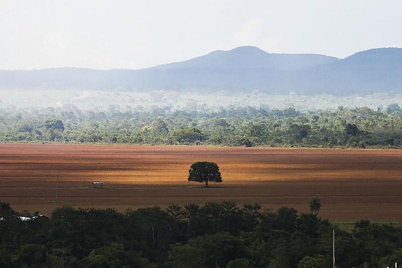 Parte das plataformas pede desmatamento zero, incluindo no Cerrado