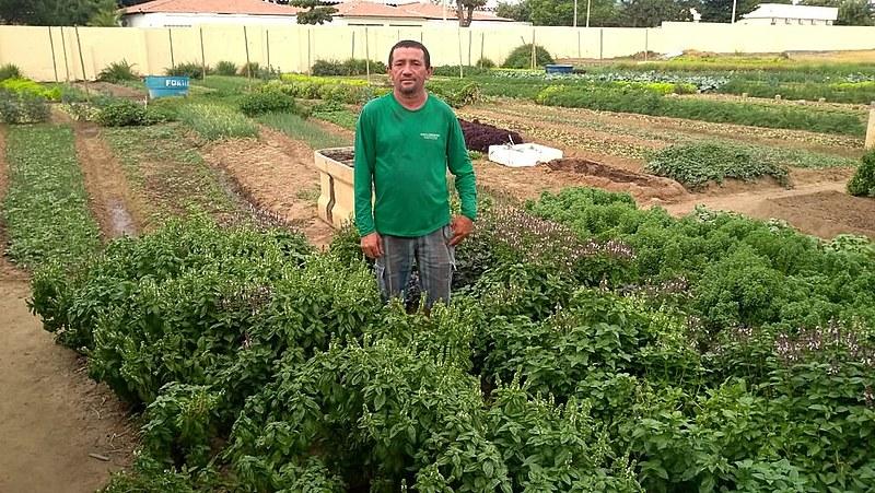 Reginaldo Corrêa trabalha há quase 30 anos na horta