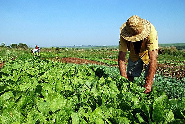 Movimentos populares têm feito fortes críticas à proposta, afirmando que ela piora a concentração de terras e compromete a reforma agrária