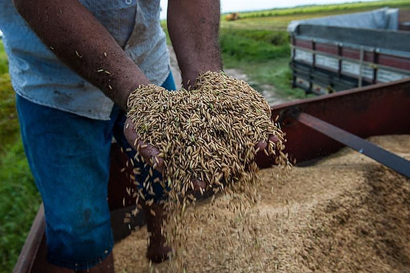 Atualmente, quatro grupos de produçãocom três ou quatro agricultores cada distribuem cerca de 170 sacolas com produtos orgânicos para consumidores fidelizados.