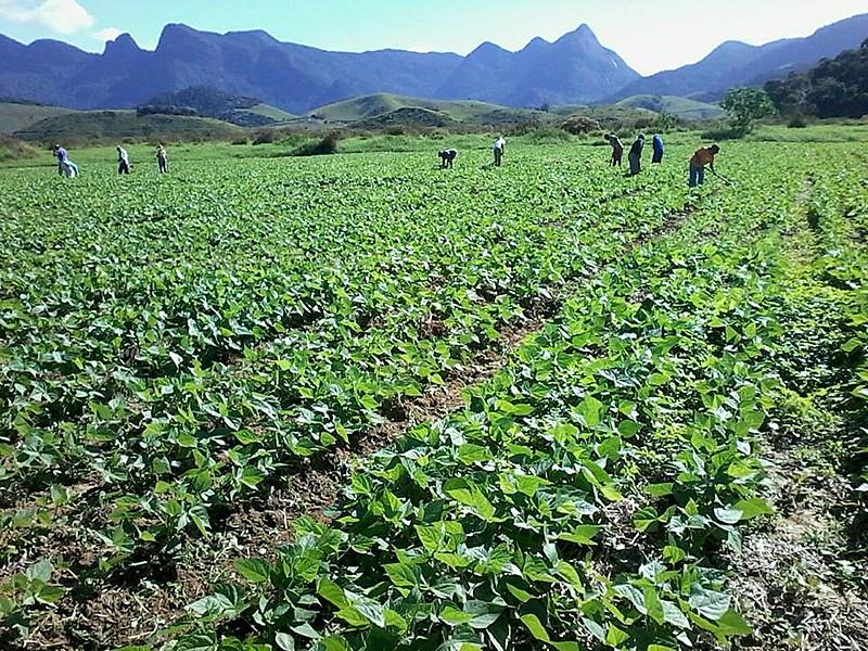 Movimento aposta na agroecologia como saída para a crise alimentar mundial
