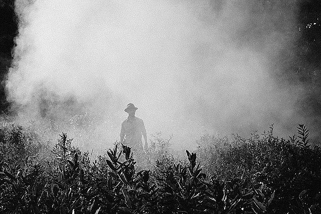 Enquanto em 2015 foram aprovados 139 agrotóxicos no país, em 2018, esse número mais que triplicou, saltando para 450