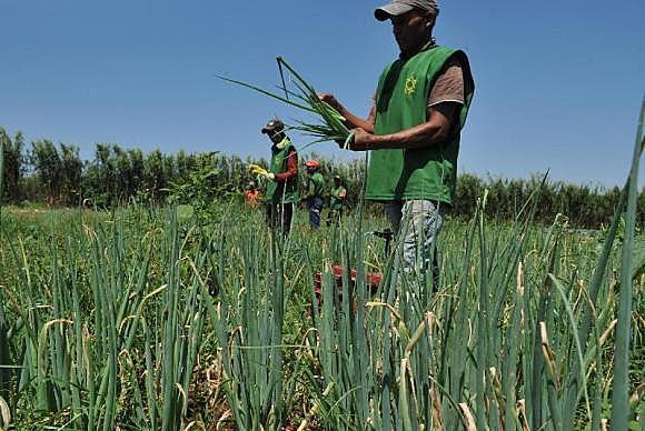 """""""Os dados não são conhecimento. São apenas outra mercadoria destinada a tornar o agricultor ainda mais dependente"""""""