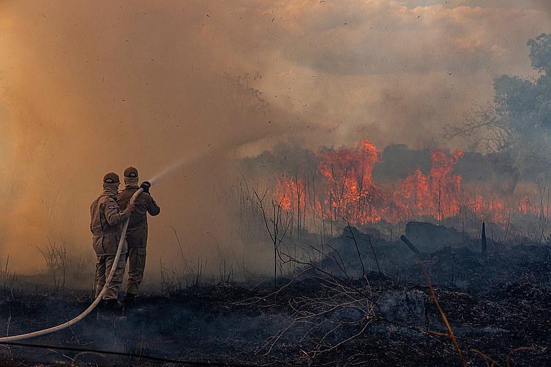 Apenas em junho de 2019, a floresta amazônica perdeu o equivalente à área urbana da cidade de São Paulo