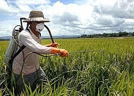 Política Nacional de Redução de Agrotóxicos é uma tentativa de reduzir o uso de veneno nas lavouras brasileiras