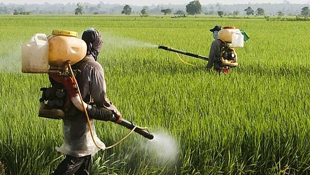 """La avalancha de licencias de agrotóxicos tiene por objetivo volver el mercado """"más accesible"""" a los agricultores"""