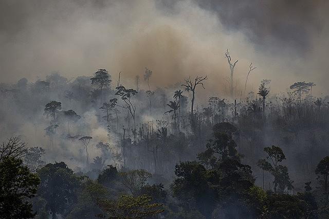 Focos de incêndio na região de Altamira, no sudoeste paraense; ação criminosa foi articulada em grupos de WhatsApp