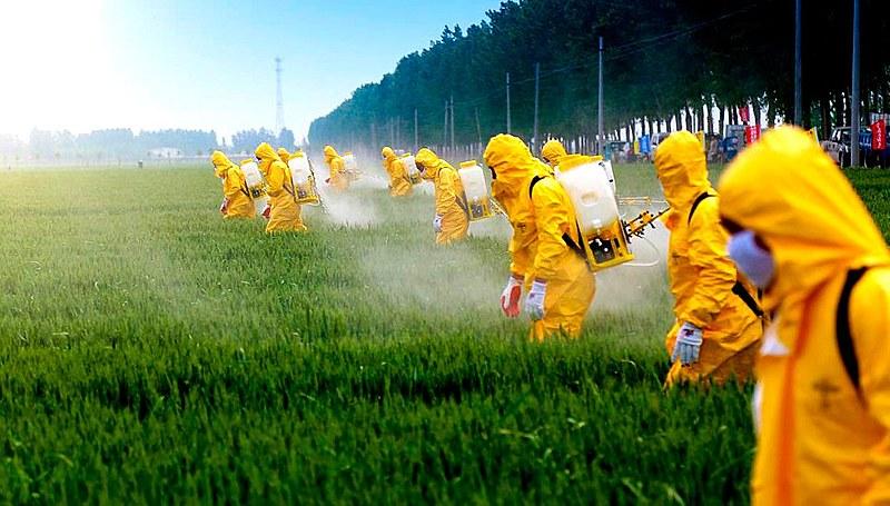 """""""Estamos com o 'liberou geral' (tanto no caso da pandemia como no da transgenia), estimulando a emergência de variantes mais agressivas e mais perigosas para os problemas que pretendemos controlar, 'deixando acontecer para ver no que dá'"""""""