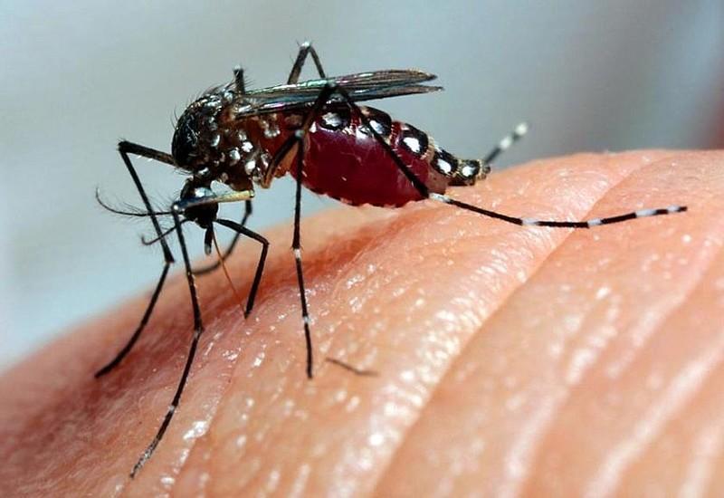 De acordo com professor, se não forem prevenidas, ainda podem aparecer doenças como chikungunya, zica, febre amarela e doenças mentais