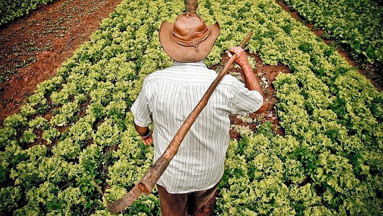 Feiras e mercados populares se destacam como os principais espaços para comercialização da agricultura familiar