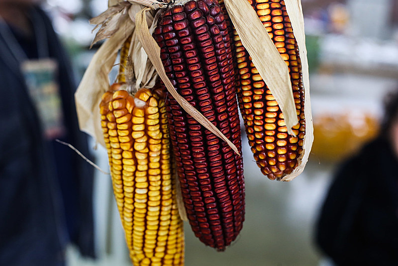 Ao final do encontro, no sábado (30), será distribuído aos participantes da Jornada um estoque de sementes de 60 espécies e 200 variedades diferentes.