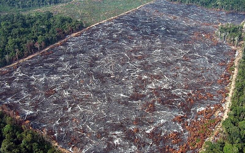 Área devastada na Amazônia. Segundo integrante da Imaflora, terras públicas sem uso devem ser destinadas à preservação
