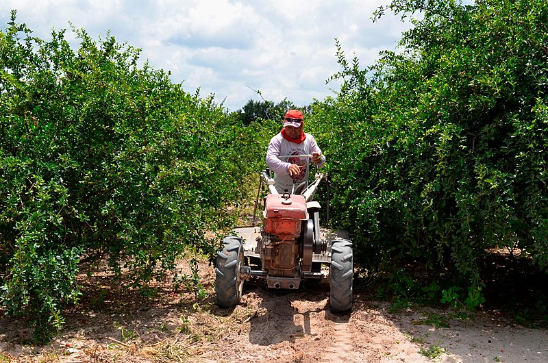 Agricultor do Assentamento Val Paraíso, no Ceará, trabalhando seu hectare de terra