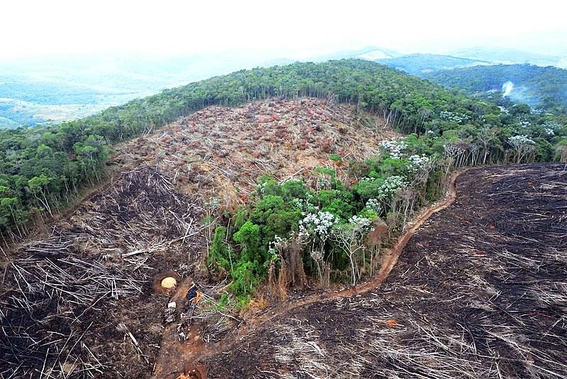 Desmatamento em área da Mata Atlântica, no estado de Minas Gerais