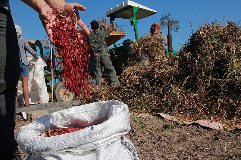 A área plantada com feijão, o vilão do momento, diminuiu 36% desde 1990, enquanto a população aumentou 41%