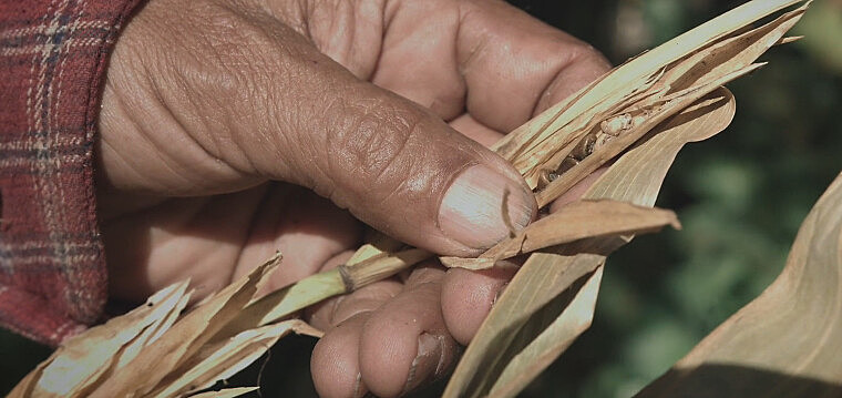 Imagem do documentário Sementes: Bem Comum ou Propriedade Privada?, produzido por coletivos de oito países
