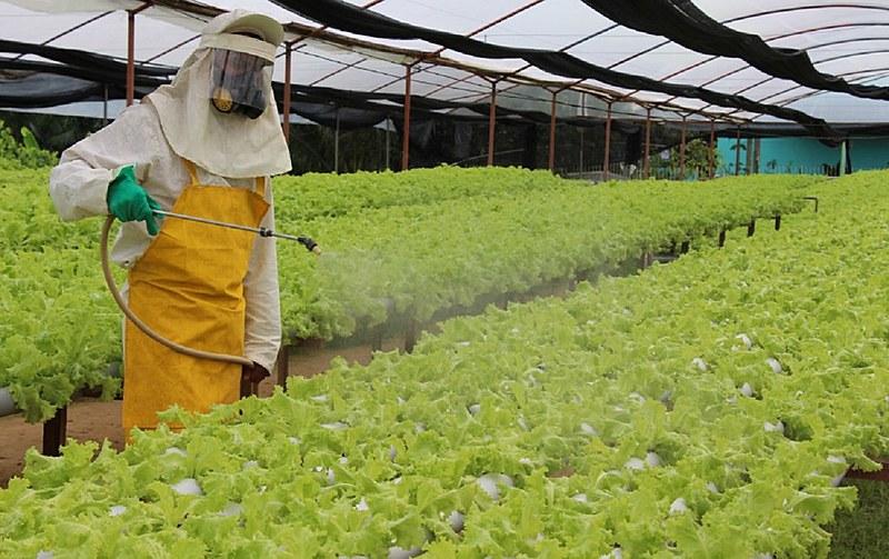 Número de amostras de alimentos contaminados com resíduos de agrotóxicos aumentou 17% em relação à pesquisa anterior