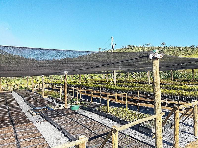 O objetivo do viveiro é produzir 720 mil mudas em Ariadnópolis e 4 milhões de mudas nativas em todo o estado