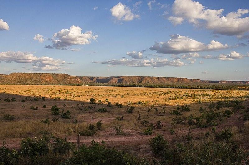 Matopiba é marcada pelo agronegócio e pela produção de monocultura com forte presença de agrotóxicos