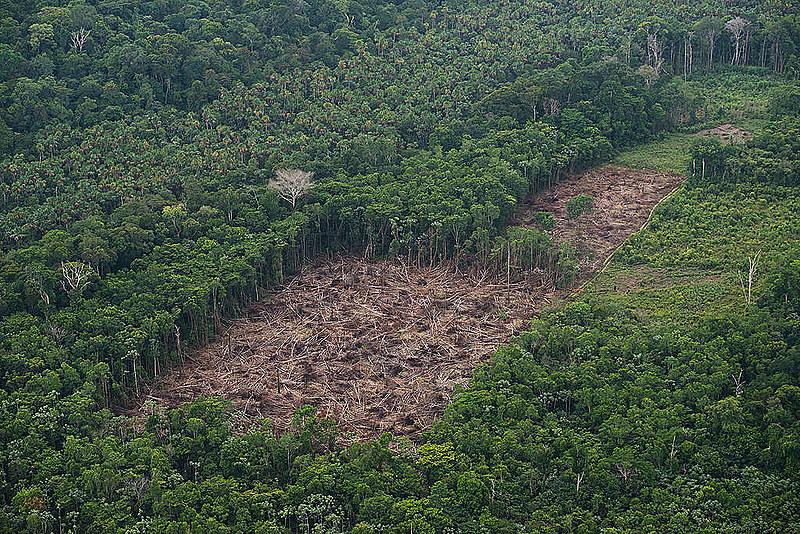 Inpe mostrou que a Amazôniaperdeu 762,3 km² no mês de junho, o que representa um aumento de 60% sobre o mesmo período de 2018