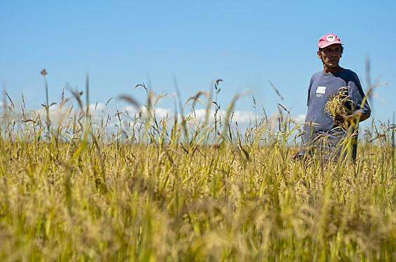 Assentamento Integração Gaúcha, onde se produzem alimentos saudáveis e sem agrotóxicos
