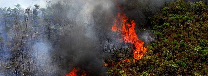 Segundo Corpo de Bombeiros, entre os dias 1º e 15 de outubro de 2019, houve mais incêndios de vegetação do que no mesmo período de 2018