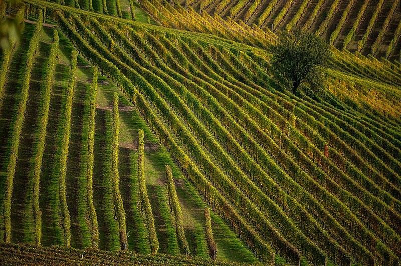 Segundo levantamento, 1% das grandes fazendas ocupa 47,6% de toda área agrícola do país
