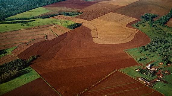 No período de 2000 a 2014, houve a redução de quase 10% das áreas com florestas