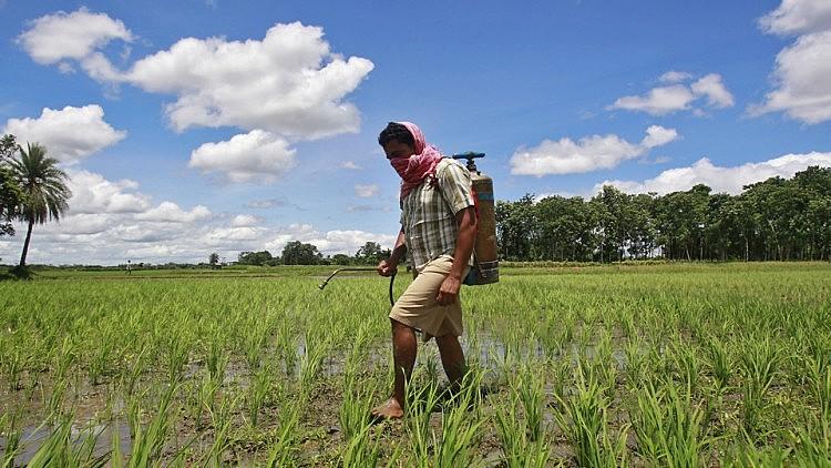 Meta dos defensores da Monsanto é conseguir a renovação por cinco anos