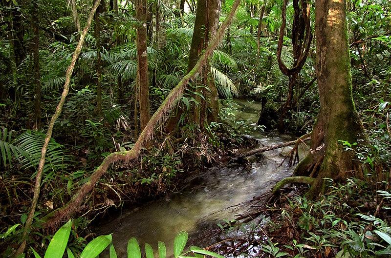 Meu quintal é a Amazônia' foi nome que damos coletivamente ao grupo de trabalho formado no Seminário nacional do Movimento Fé e Política
