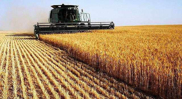 Concentración en la cadena productiva e incremento de los monocultivos representan una amenaza a la soberanía alimentar