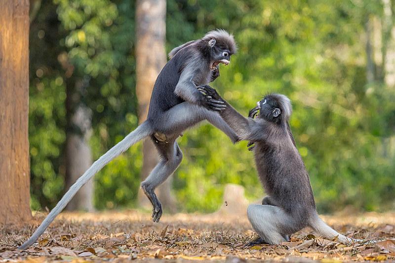 Somos seres sociais inseridos em culturas milenares, mas, ao mesmo tempo, somos animais