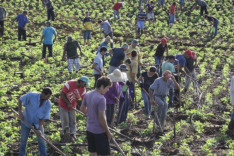 Agricultura familiar produz 70% dos alimentos consumidos no Brasil