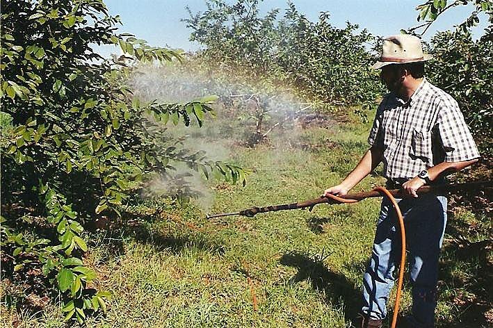 No Brasil, o crescimento no mercado de agrotóxicos foi de 190%, de acordo com dados divulgados pela Anvisa