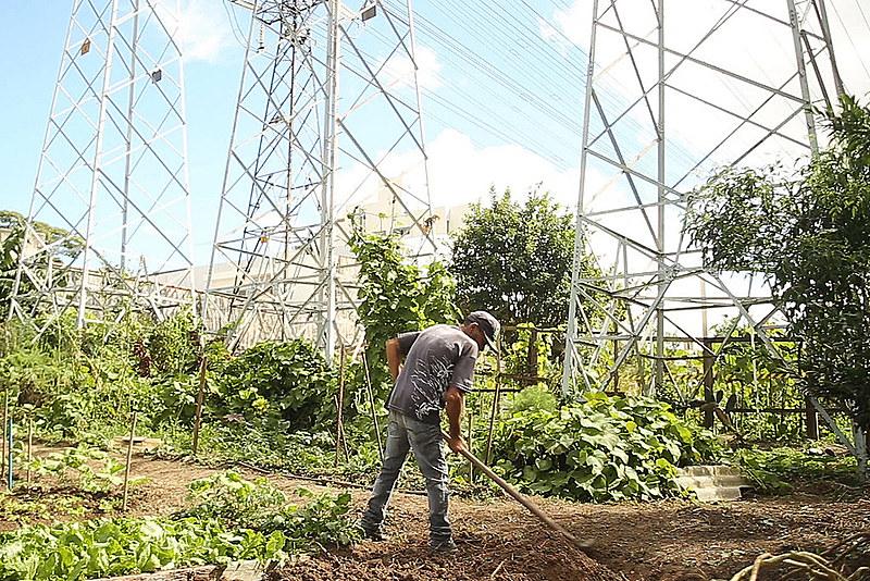 Nas hortas comunitárias de São Bernardo do Campo trabalhador tem incremento de renda e ajuda a recuperar a biodiversidade do local