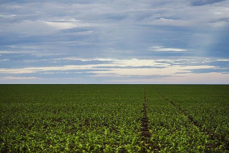 Área de plantação de soja no noroeste do Mato Grosso, estado que tem mais propriedades acima de 10 mil hectares