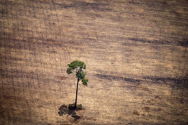 Documento aponta que desregulamentação de marcos ambientais pode intensificar desmatamento na região amazônica