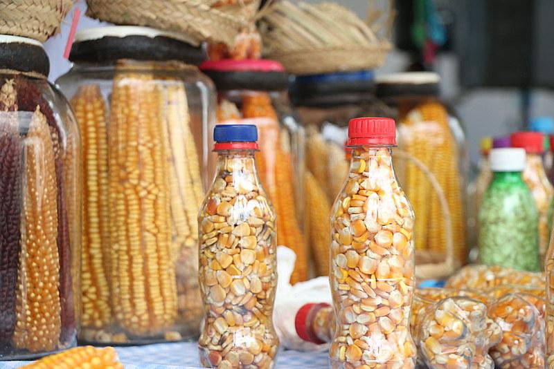 A Paixão é alimentada pela tradição popular das sementes crioulas