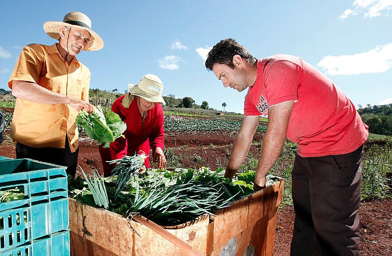 Trabalhadores rurais colhem verduras