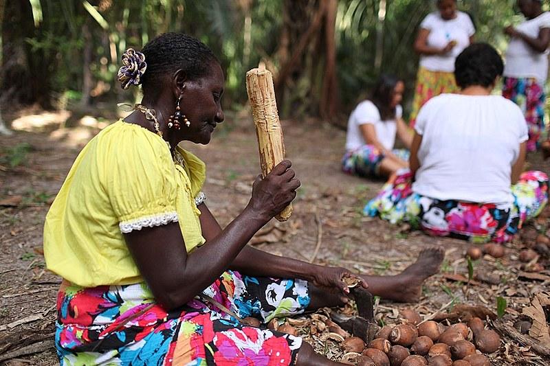A extração da amêndoa geralmente é feita pelas mulheres, que utilizam uma espécie de martelo para romper a casca do fruto.